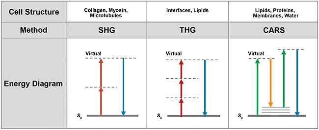 Depending on the type of cell structures, different nonlinear imaging methods are applicable.