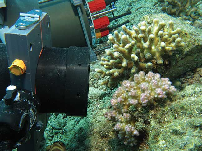 The Benthic Underwater Microscope (BUM) is positioned to study coral competition.