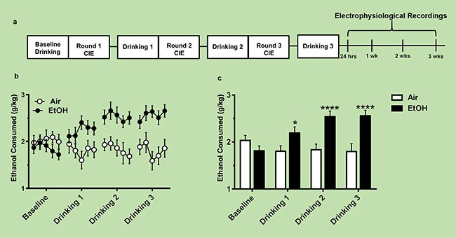 This timeline shows that chronic intermittent ethanol (CIE) exposure induces increased voluntary ethanol consumption in the lab mice.