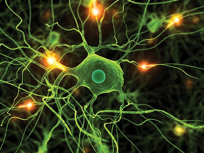 Imaging technology advances are enhancing the study of biological systems such as neurons.