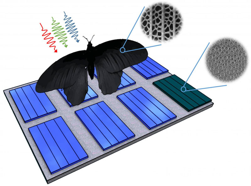 Butterfly wing nanostructures inspire photovoltaics discovery, Karsruhe Institute of Technology.