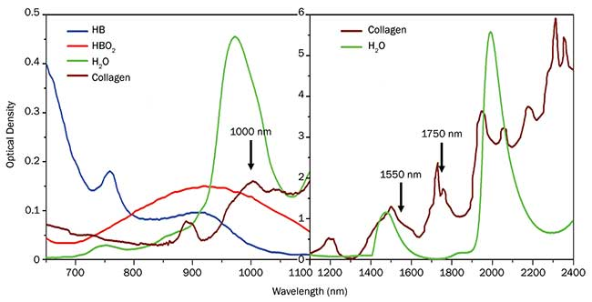 Absorption spectrum for key biological molecules in tissue in the NIR and SWIR.