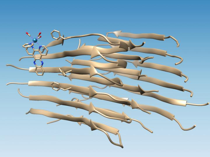 Light-activated probe identifies binding site on amyloid beta peptides. Rice University.