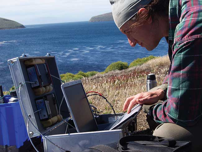 Scientists are using portable spectrometers to study the thin-billed prion, a species of seabird that is mostly found in the southern oceans that can see and produce signals in the UV range
