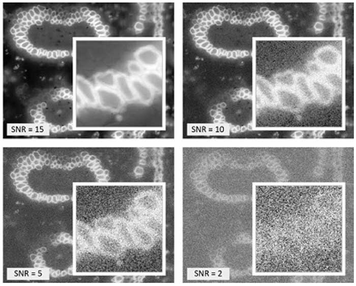 Four versions of a fluorescence image of a convallaria slice with different signal-to-noise-ratio settings