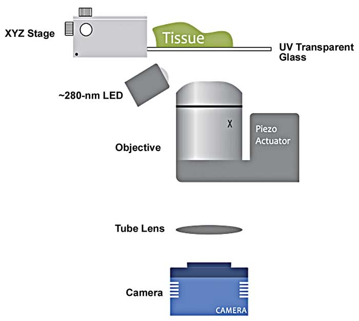 A diagram displaying the optical setup for a MUSE (microscopy with UV surface excitation) microscope.
