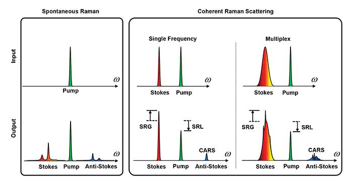 Spontaneous Raman spectroscopy (left) covers the entire molecular vibration and allows extraction of subtle compositional features by multivariate analysis. Coherent Raman microscopy (right) provides a speed advantage by focusing energy into either a single Raman band or into a defined spectral window for target molecules.