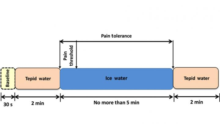 A block diagram illustrates the cold pressor protocol applied in a Drexel University study on functional near-infrared spectroscopy in assessing pain response in the brain.