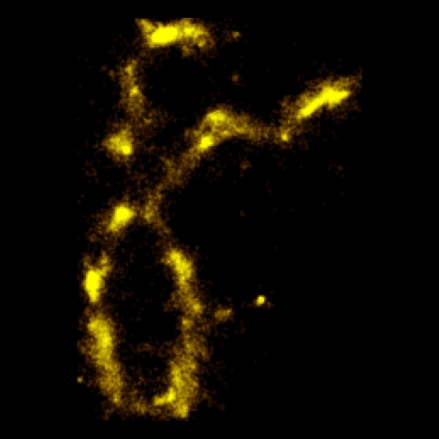 Technique for imaging DNA fluorescing. Northwestern University.