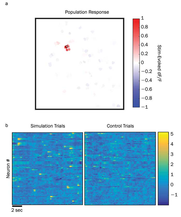 The results above come from a test study of holographic photostimulation pyramidal neurons in the live brain of a mouse during an active treadmill study.