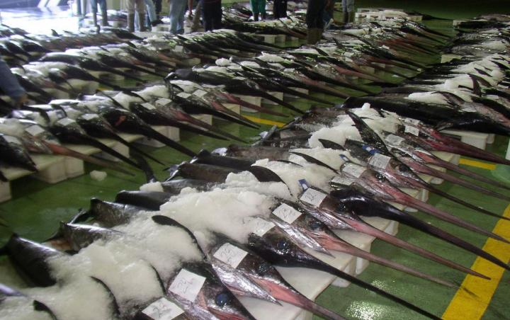 Swordfish market in Burgos, Spain.