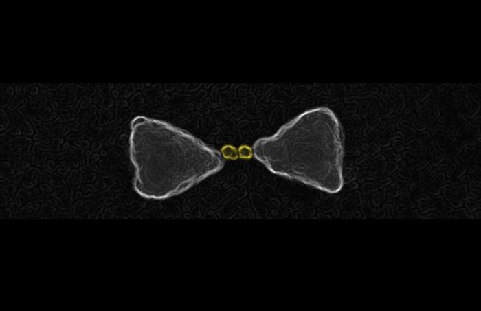 Gold nanoparticles chemically guided inside the hot spot of a bow-tie nanoantenna