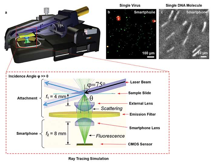 Smartphone fluorescence and dark-field microscopy based on an oblique illumination design can improve detection sensitivity.