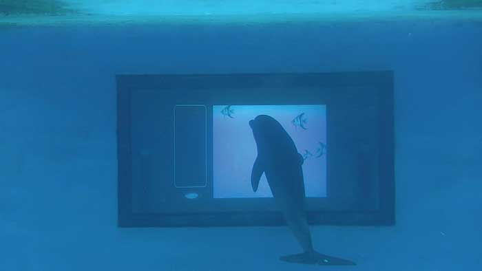 The eight-foot underwater touchscreen enables dolphins to optically interact with the system.