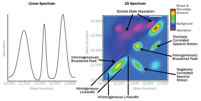 A 2D electronic spectrum potentially contains many different types of information.