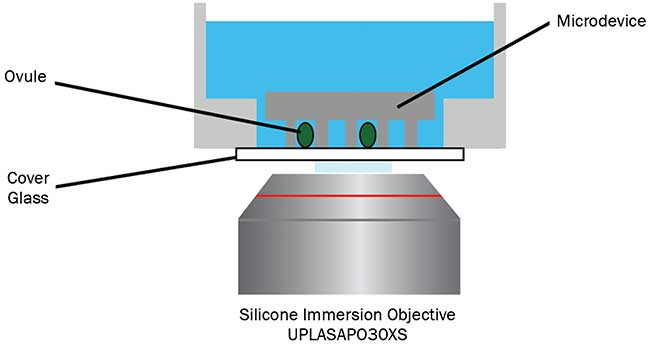 Schematic illustration of microdevice imaging with a silicone immersion objective.