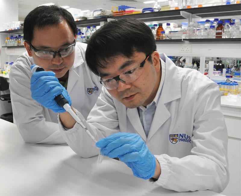 National University of Singapore scientists discovered light-activated combination therapy for cancer treatment.  From left: Dr. Lin Qingsong and Dr. Wang Jigang.