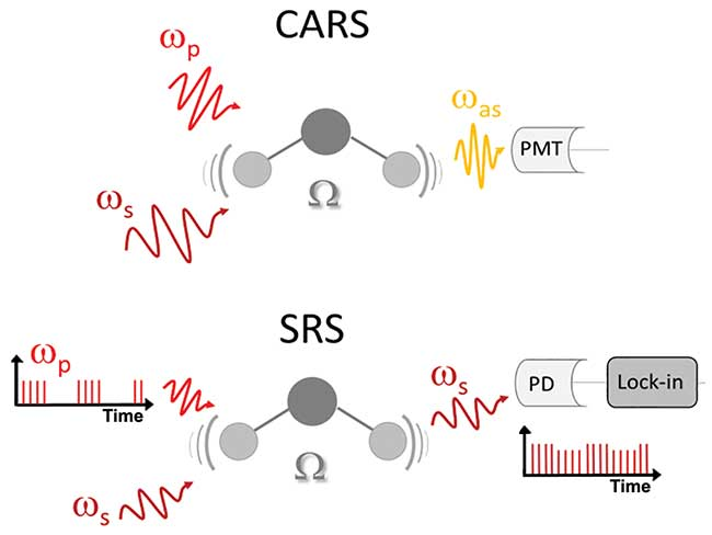 Coherent anti-Stokes Raman scattering (CARS) and stimulated Raman scattering (SRS) principle showing a molecular vibration mode excited by both Stokes and pump laser beams.