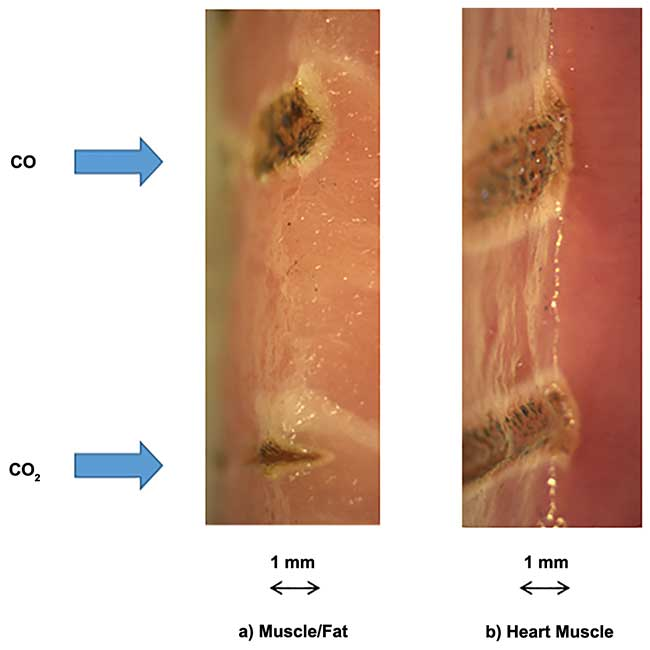 Comparison of porcine tissue samples cut with 8 W of CO and CO2 lasers at a speed of 4 mm/s.