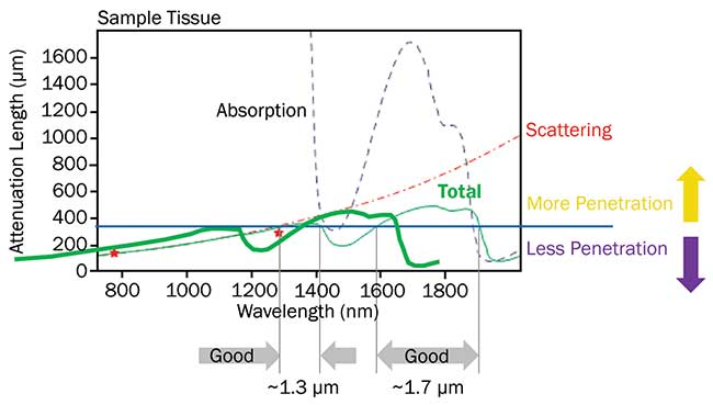 The penetration depth for ultrafast lasers in live brain tissue is limited by a combination of scattering and absorption.