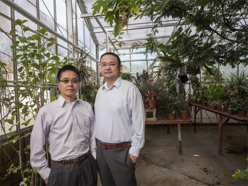 Assistant professor Ronggui Yang (left) and assistant professor Xiaobo Yin, light splitting greenhouse film, UC Boulder.