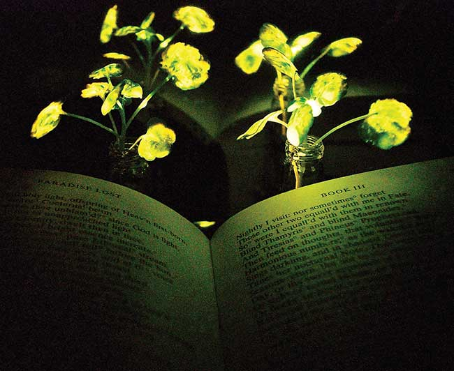 Two mature watercress are used as nanobionic light-emitting plants to illuminate John Milton's Paradise Lost.