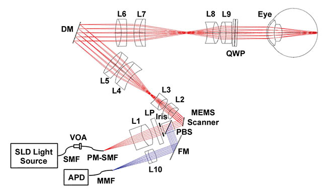 Figure 1. Hand-held adaptive optic scanning laser ophthalmoscopy (HAOSLO) probe system schematic and optical design. Red and blue rays depict the illumination and collection paths, respectively. APD: avalanche photodiode; DM: deformable mirror; FM: fold mirror; L1–L10: lenses; LP: linear polarizer; MMF: multimode fiber; PBS: polarizing beamsplitter; PM: polarization-maintaining; QWP: quarter wave plate; SLD: superluminescent diode; SMF: single-mode fiber; VOA: variable optical attenuator. Reprinted with permission from reference 1.