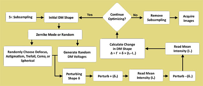 Figure 3. Flow diagram of the stochastic Zernike gradient descent (SZGD) algorithm. First, images are 5× subsampled to increase the algorithm's iteration speed. Next, the perturbing shape d is determined by randomly selecting one of eight Zernike modes or a uniformly random shape in the actuator basis. All subsequent steps follow the stochastic parallel gradient descent (SPGD) technique. Prior to ending the optimization, the subsampling is removed and the image acquisition speed is restored to its preoptimization state. DM: deformable mirror. Reprinted with permission from reference 1.