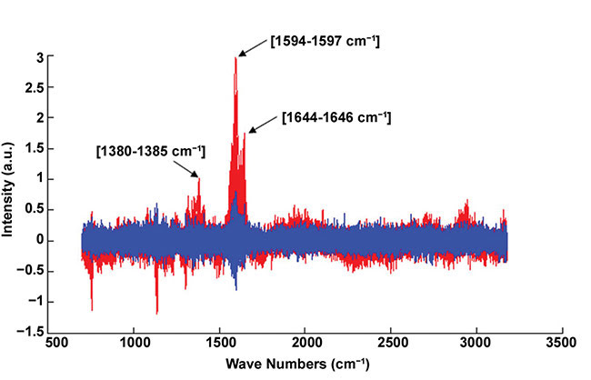 Figure 5. Example of normalized Raman spectra. Infected blood cell (red); healthy blood cell (blue). The red spectrum exhibits the representative peaks of the hemozoin biocrystal (i.e., 1380-1385, 1594-1597, and 1644-1646 cm-1). Courtesy of J. Klossa/TRIBVN and M. Manfait/MéDIAN Unit, UMR CNRS 6142, France.