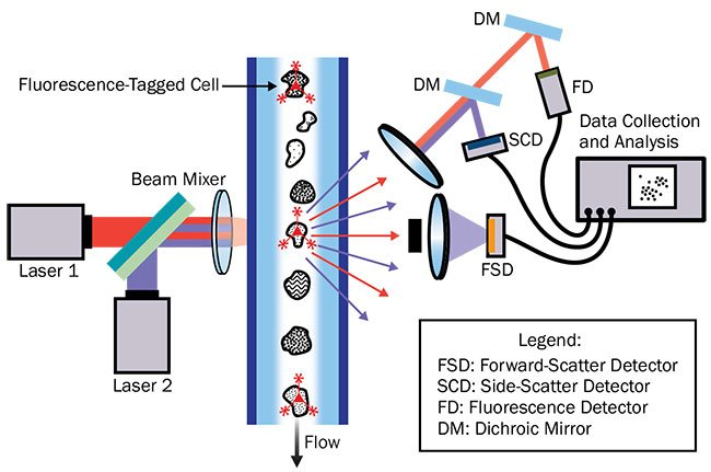 Figure 1. The basic layout of a flow cytometer. Courtesy of Hamamatsu Corp.