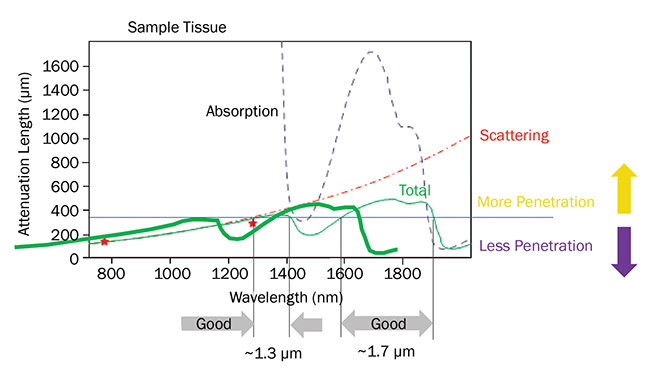 The penetration depth for ultrafast lasers in live brain tissue is limited by a combination of scattering and absorption. Two optimum penetration windows are centered at 1300 and 1700 nm. Based on a private communication with professor Chris Xu, Cornell University. Courtesy of Coherent Inc.