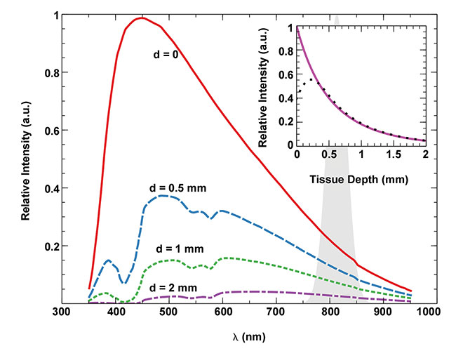 Figure 3. The expected spectrum of detected CLI signal from different depths of breast tissue. The intrinsic ?-2 Cerenkov radiation spectrum provided by the Frank-Tamm formula is modified by wavelength-dependent absorption and scattering in a generic breast tissue model (see reference 4) and the quantum efficiency curve of the LightPath imaging system. The unlabeled shaded peak at 813 nm indicates the comparatively narrow emission spectrum of indocyanine green (ICG), an untargeted fluorescent tracer generally used to visualize vasculature. The solid purple trace in the inset shows how the Cerenkov intensity quickly drops off with Cerenkov emission depth, resulting in a surface-specific signal. The black dotted line in the inset shows a similar depth dependence based on 18F decay depth. For decays that occur very close to the surface, some positrons can escape, which shortens the average track length in tissue and results in lower potential to emit Cerenkov radiation. Courtesy of Kunal Vyas/Lightpoint Medical.