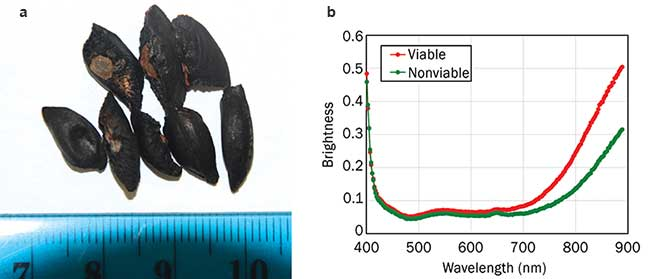 RGB image (a) and hyperspectral data (b) of corymbia seeds, showing a difference in reflectance correlated with seed viability.