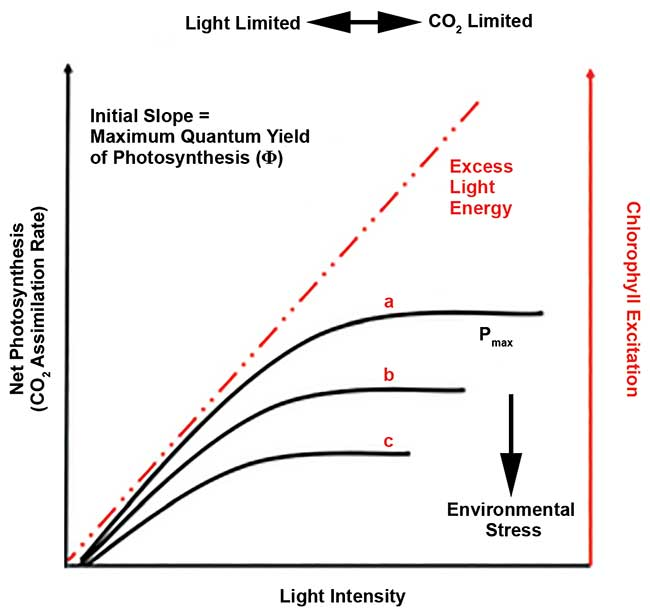 Photosynthetic light response curves performed under favorable conditions