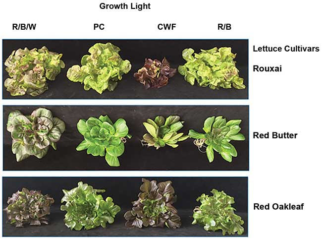 Spectral effects on size, form, and red pigmentation in red lettuce.