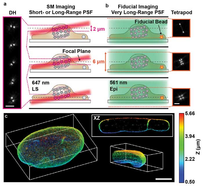 TILT3D combines light sheet microscopy, localization microscopy, and light engineering.