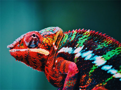 Novel nanolaser leverages the same color-changing mechanism that a chameleon uses to camouflage its skin. Courtesy of George Lebada.