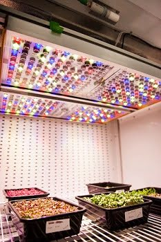 Osram's smart horticulture lighting system prototype used in NASA ground research. Courtesy of Osram.