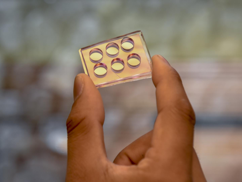 Nanomushroom chip created for testing biofilms. OIST.