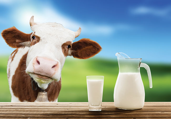 Dairy 3