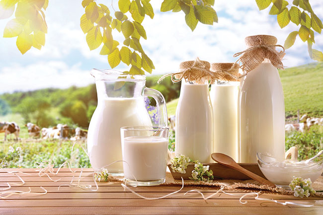 dairy farm products