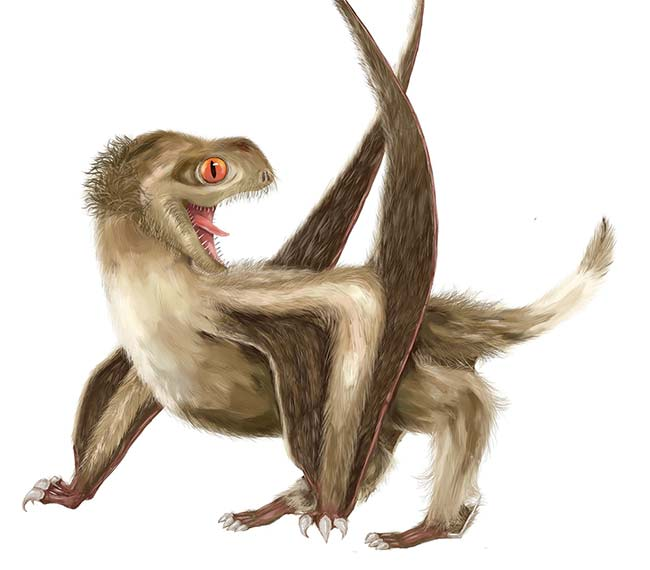 Depiction of a pterosaur, which had four different feather types over its head, neck, body, and wings that would generally have been a ginger-brown color. Courtesy of Yuan Zhang.