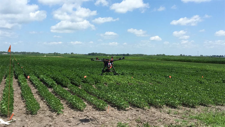 Using machine learning to diagnose soybean stressors, Iowa State University.