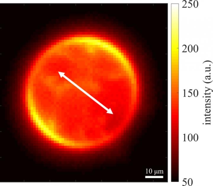Graphene layer enables advance in superresolution microscopy, University of Göttingen.
