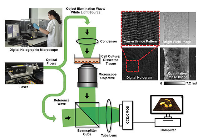 Figure 1. The concept of laser-based inverted off-axis DHM in transmission configuration for correlated label-free bright-field and quantitative phase imaging of dissected tissues (upper right) and living cell cultures in the environment of a biomedical laboratory. Adapted with permission from References 3 and 4.