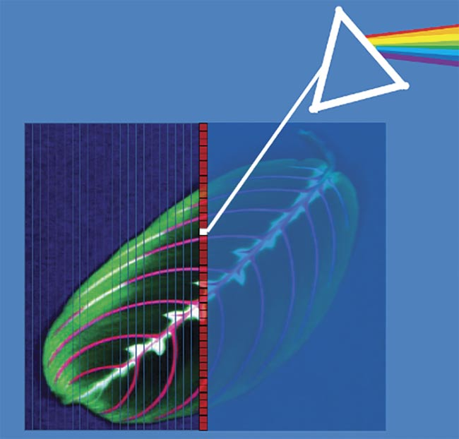 Figure 1. Hyperspectral imaging is spectroscopy for every pixel. Courtesy of Resonon Inc.