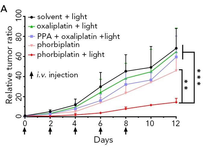 Red-light-activated anti-tumor prodrug phorbiplatin, City University of Hong Kong.