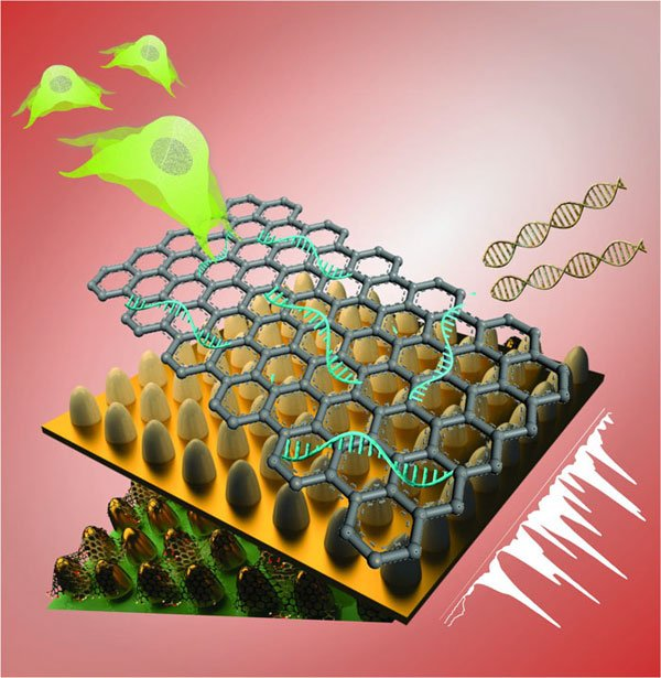 This biosensing platform consists of an array of ultrathin graphene layers and gold nanostructures. The platform, combined with Raman spectroscopy, detects genetic material and characterizes different kinds of stem cells with greater reliability, selectivity and sensitivity than today's biosensors. Courtesy of Letao Yang, KiBum Lee, Jin-Ho Lee, and Sy-Tsong (Dean) Chueng. Rutgers University.