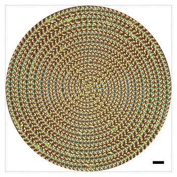 A concentric array of liquid crystal microlenses provides 4D information about objects. Scale bar, 20 µm. Credit of ACS Nano 2019, DOI: 10.1021/acsnano.9b07104.