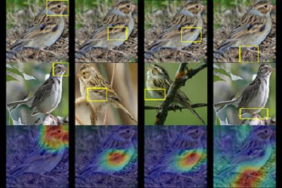 Birdwatching with AI: How a Computer Identifies Species